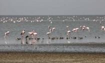 Lake+Abijatta+birding